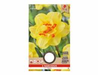 Narcis zahradní, velkokorunný TAHITI 5ks