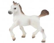 Arabský kůň hříbě
