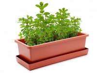 Vypěstuj si mátu, truhlík terracota 40 cm, Domestico