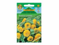 Osivo Slunečnice roční plnokvětá, žlutá
