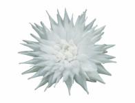 Kvet voskový JIŘINA KAKTUS biely 15cm
