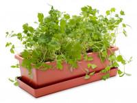 Vypěstuj si libeček, truhlík terracota 40 cm, Domestico