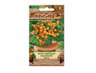 Osivo Rajče keříčkové balkónové VENUS, oranžové