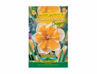 Narcis zahradní, orchideokvětý ORANGERY 3ks