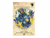 Iris hollandica – kosatec směs Nostalgie 10 ks