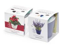 Vypěstuj si levanduli a jalapeňo 1+1 set, fialový a bílý samozavlažovací květináč 10x10 cm, Domestico