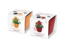 Vypestujte si CHILLI habanero + Jalapeno, samozavlažovacie kvetináče 13x13 CM, Domestic