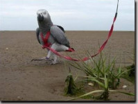 Traky s vodítkom pre papagáje Terra veľ. S