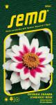 Semo Cínia - Zahara Starlight Rose 15s