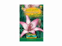 Lilium ROSELA´S DREAM 2ks Gardenia