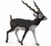 antilopa jelení