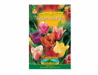 Tulipán třepenitý, crispa, směs 4ks