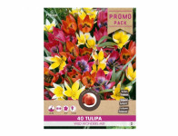 Směs PROMO tulipán WILD WONDERS 40ks
