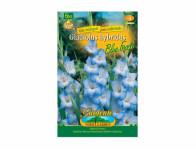 Gladiola velkokvětá BLUE FROST 6ks
