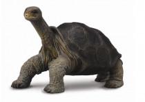 Želva obří