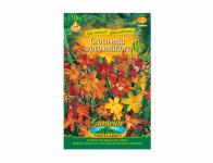Crocosmia Montbretie 10ks Gardenia
