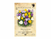 Šafrán, krokus botanický, směs 12ks