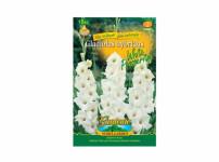 Gladiolus WHITE PR 8ks Gardenia