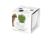 Vypestujte si mačacia tráva, darčeková sada sa samozavlažovacím kvetináčom, BIELY 13x13 CM, Domestic