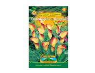 Zantedeschia aeth.SELINA/TREASURE 1ks Gardenia
