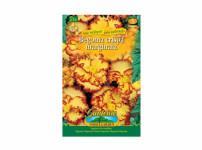 Begonia žlutá, červená Gardenia 2ks