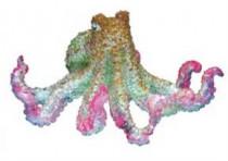 Dekorace do akvária - Chobotnice Nobby 10 x 11 cm