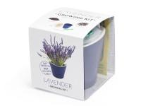 Vypěstuj si levanduli, samozavlažovací květináč fialový 10x10 cm, Domestico