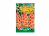 Gladiolus PETER P.8ks Gardenia