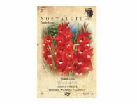 Gladiolus TRADERHORN 8ks Nostalgie