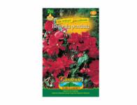Begonia červená Gardenia 2ks