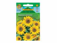 Osivo Slunečnice roční jednoduchá, žlutá