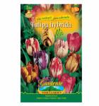 Tulipán rembrandt, směs 5ks