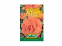 Begonia lososová Gardenia 2ks