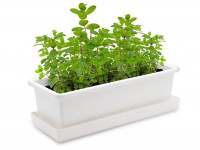 Vypěstuj si mátu, truhlík bílý 40 cm, Domestico