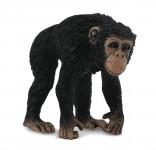 Šimpanz - samice