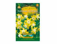 Narcis botanický PIPIT 5ks