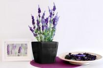 Vypěstuj si levanduli, samozavlažovací květináč černý 13x13 cm, Domestico