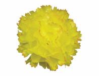 Kvet voskový KARAFIÁT žlto oranžový 9cm