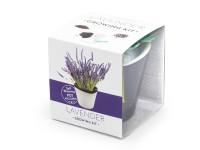 Vypěstuj si levanduli, samozavlažovací květináč černý 10x10 cm, Domestico