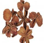 Dekorace - Land lotus 4 ks