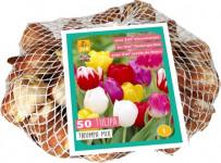 Síťka - XXL - Tulipán Triumph Mix (50 cibulí)