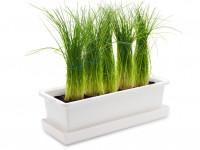 Vypěstuj si pažitku, truhlík bílý 40 cm, Domestico