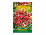 Dahlia LITTLE TIGER Gardenia