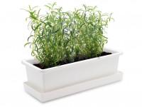 Vypěstuj si rozmarýn, truhlík bílý 40 cm, Domestico