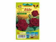 Růže velkokvětá keřová