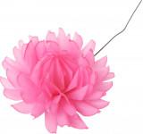 Jiřina vosková - velká růžová