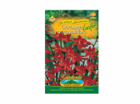 Crocosmia LUCIFER 5