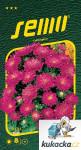 Semo Astra čínska - Průhonický trpaslík šarlátový 0,5g